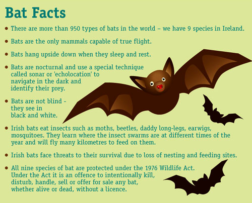 Pipistrelle Bats on reality TV | Green Jam Jar