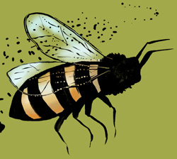 Bee Illustration by Karen Nolan